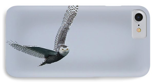 Snowy Owl In Flight IPhone Case by Gary Hall