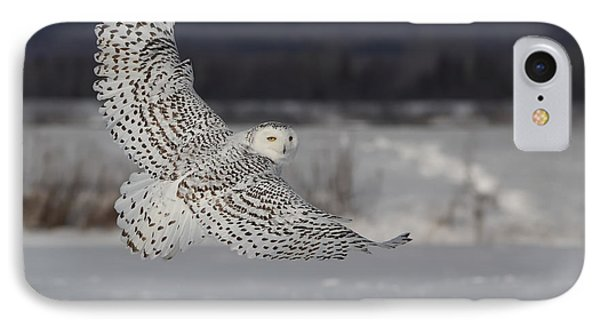 Snowy Owl In Flight IPhone Case by Mircea Costina Photography