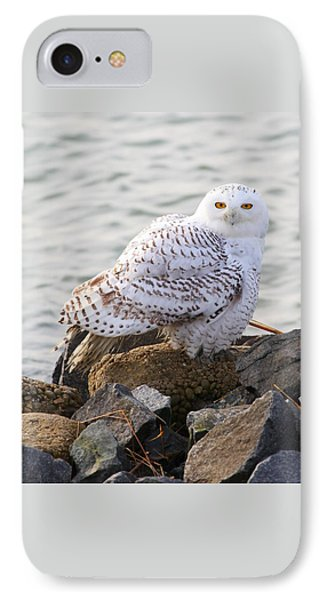 Snowy Owl In New Jersey IPhone Case