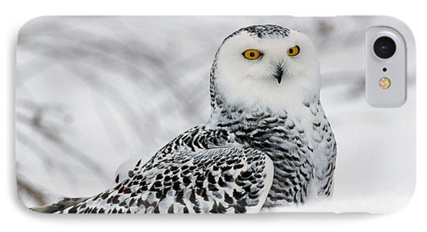 Snowy Owl In Snow, Michigan, Usa IPhone Case