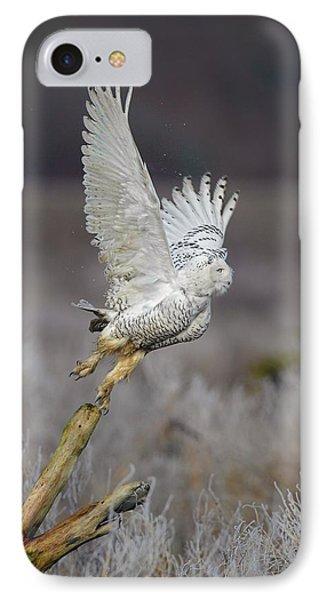 Snowy Owl Liftoff IPhone Case by Daniel Behm
