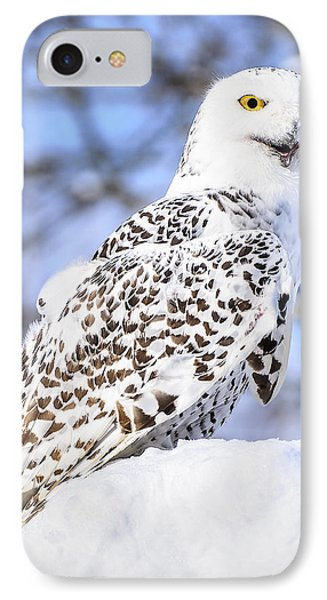Snowy Owl Look Out Phone Case by LeeAnn McLaneGoetz McLaneGoetzStudioLLCcom