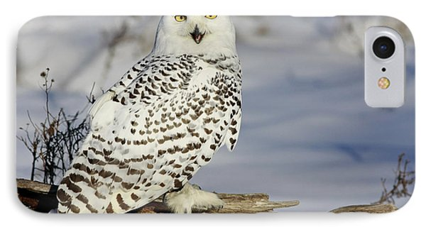 Snowy Owl On A Winter Hunt Phone Case by Inspired Nature Photography Fine Art Photography