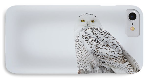 Snowy Owl Perfection IPhone Case by Cheryl Baxter