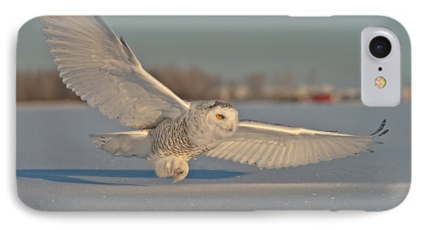 Snowy Owl Pictures 7 IPhone Case