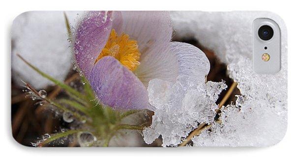 Snowy Pasqueflower IPhone Case
