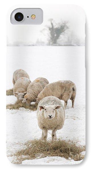 Snowy Sheep Phone Case by Anne Gilbert