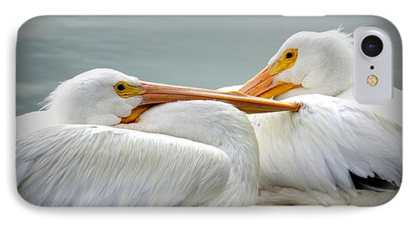 Snuggly Pelicans IPhone Case by Laurie Perry
