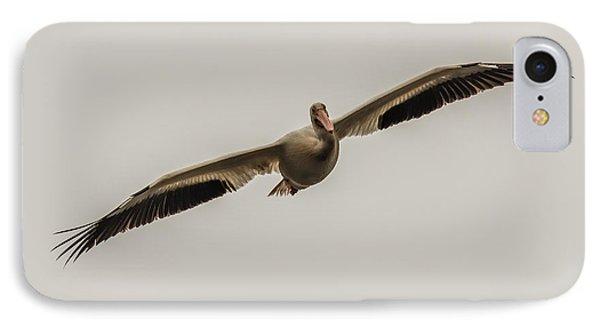 Soaring Pelican IPhone Case by Paul Freidlund