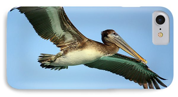 IPhone Case featuring the photograph Soaring Pelican by Suzanne Stout
