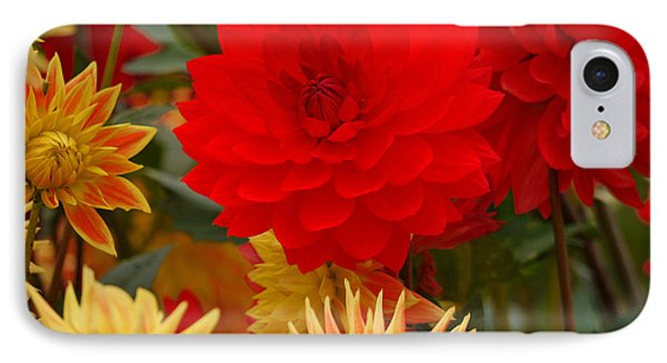 IPhone Case featuring the photograph Sockeye And Upmost Dahlias by Jordan Blackstone