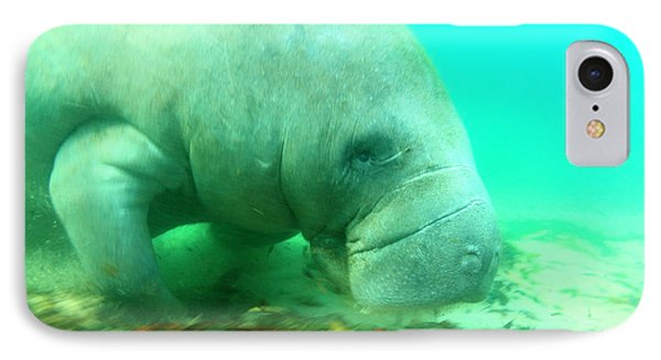 Solitary Manatee Swimming In The Weeki IPhone Case by James White
