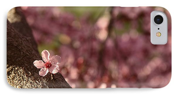 Solo In The Blossom Chorus IPhone Case by Jennifer Apffel