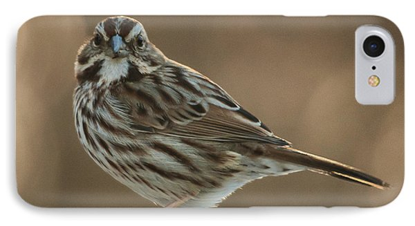 Song Sparrow IPhone Case by Jim Moore