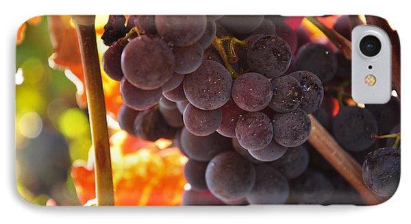 Sonoma Grapes IPhone Case