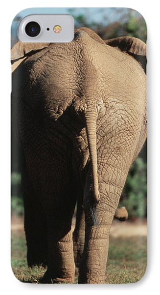South Africa, Addo Elephant National IPhone Case by Paul Souders