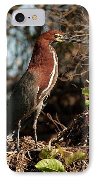 South America, Brazil, Pantanal IPhone Case