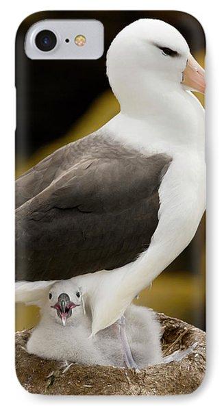 Albatross iPhone 7 Case - South Atlantic, Falkland Islands, New by Jaynes Gallery