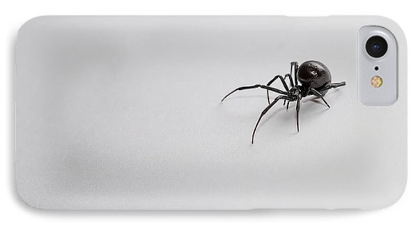 Southern Black Widow Spider IPhone Case by Amber Flowers
