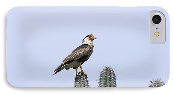 Southern Crested-caracara Polyborus Plancus IPhone Case by David Millenheft