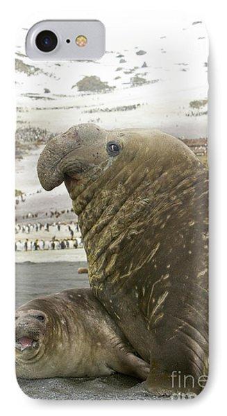 Southern Elephant Seal Couple  IPhone Case by Yva Momatiuk John Eastcott