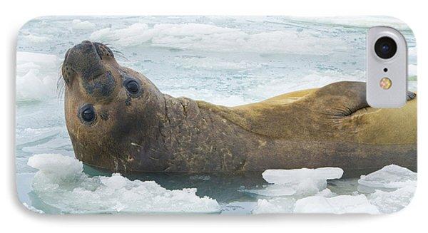 Southern Elephant Seal Reclining IPhone Case by Yva Momatiuk John Eastcott