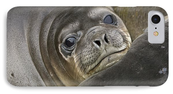 Southern Elephant Seal Pup South IPhone Case by Yva Momatiuk and John Eastcott