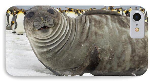 Southern Elephant Seal Weaner IPhone Case by Yva Momatiuk John Eastcott