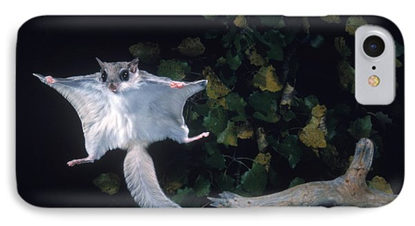 Southern Flying Squirrel Phone Case by Nick Bergkessel Jr