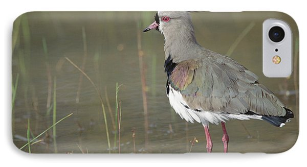 Southern Lapwing In Marshland Pantanal IPhone Case by Tui De Roy