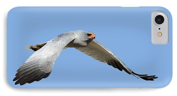 Southern Pale Chanting Goshawk In Flight IPhone Case by Johan Swanepoel