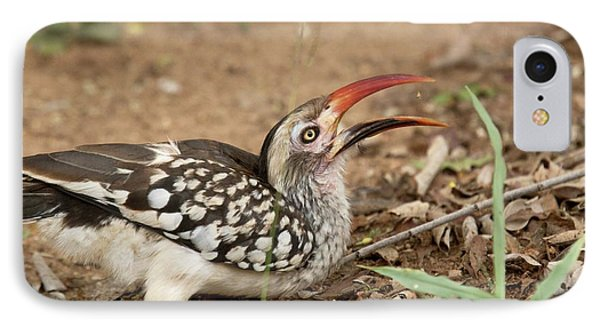 Hornbill iPhone 7 Case - Southern Red-billed Hornbill by Bob Gibbons