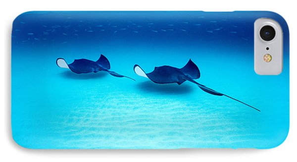 Southern Stingrays Grand Caymans IPhone Case