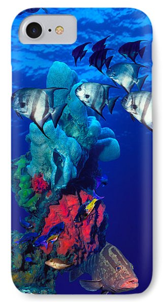 Spadefishes With Nassau Grouper IPhone Case by Panoramic Images
