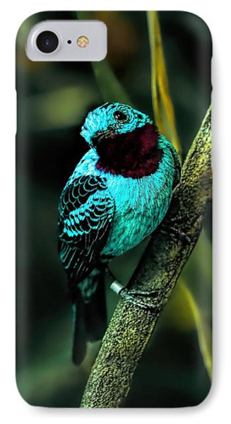 IPhone Case featuring the painting Spangled Cotinga Turquoise Bird by Tracie Kaska
