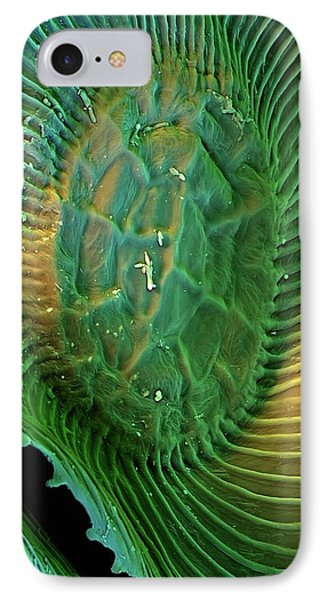 Spanish Moss Leaf IPhone Case by Stefan Diller