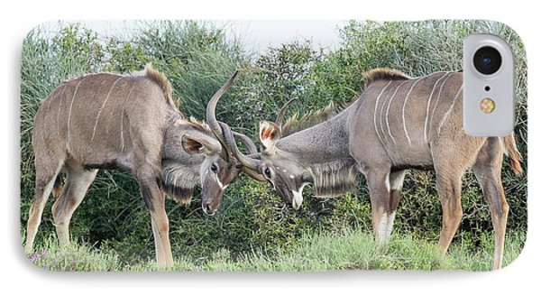 Sparring Kudu Bulls IPhone Case by Peter Chadwick