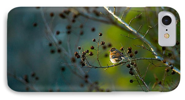 Sparrow In The Warm Light IPhone Case by Shelby  Young
