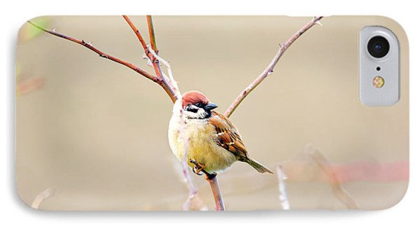 Sparrow On Branch  IPhone Case by Tommytechno Sweden