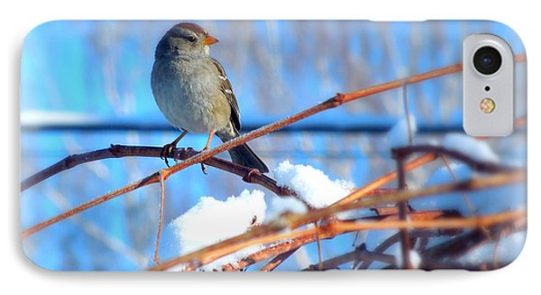 Sparrow On Grapevine IPhone Case by Heidi Manly