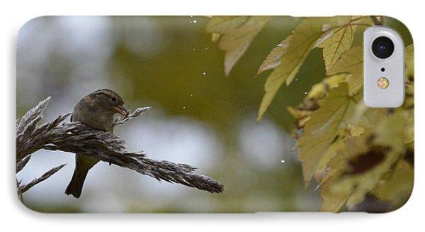 Sparrow Pampas 11 IPhone Case