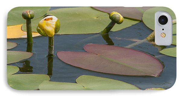 IPhone Case featuring the photograph Spatterdock Heart by Paul Rebmann