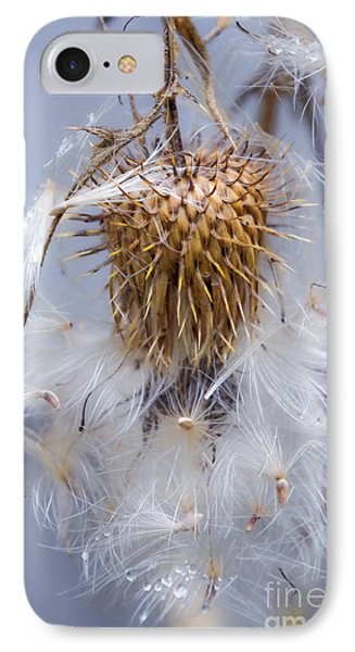 Spent Thistle IPhone Case by Adria Trail