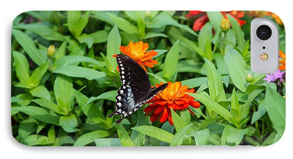 Spicebush Swallowtail IPhone Case by Angela DeFrias