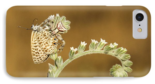 Spider Feeds On A Butterfly 3  IPhone Case by Alon Meir