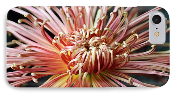 Spider Mum II IPhone Case by Mary Haber