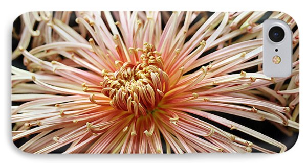 Spider Mum  IPhone Case by Mary Haber