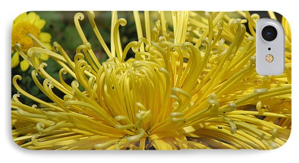 Spider Mums Maybe 2 IPhone Case