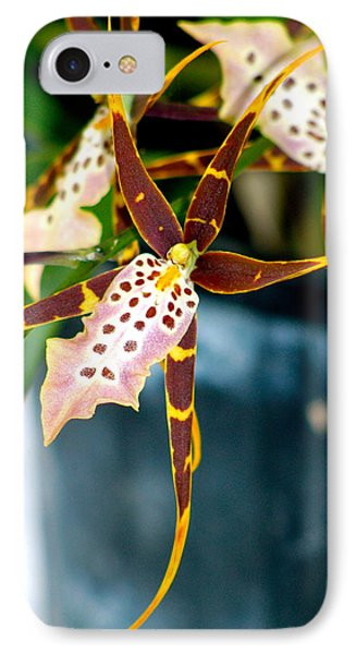 Spider Orchid IPhone Case by Lehua Pekelo-Stearns