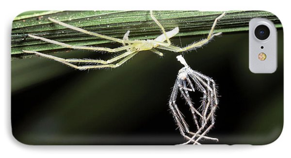 Spider With Shed Skin IPhone Case